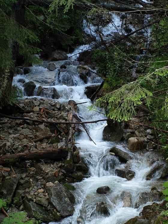 Znalezione obrazy dla zapytania rzeka w lesie